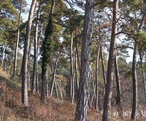 Vila pozitie panoramica  Brasov