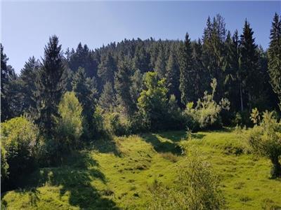 Proprietate in armonie cu natura, segmentul LUX, Sacele, Brasov