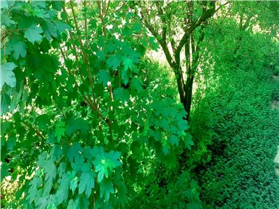 OFERTA TRANZACTIONATA!!EXPLOREAZA VIRTUAL! Compozitie luminoasa, in imbratisarea spatiului verde, Astra, Brasov