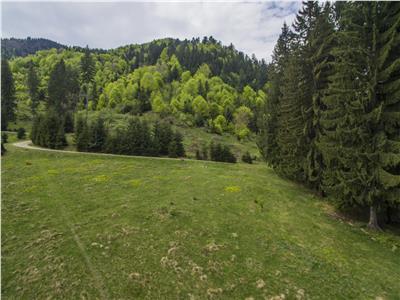 OFERTA TRANZACTIONATA!!!VEZI Filmare cu drona!!  9.000 mp,in imbratisarea purei naturi,partial impadurit