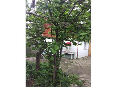 Casuta, in cartierul florilor, Brasov